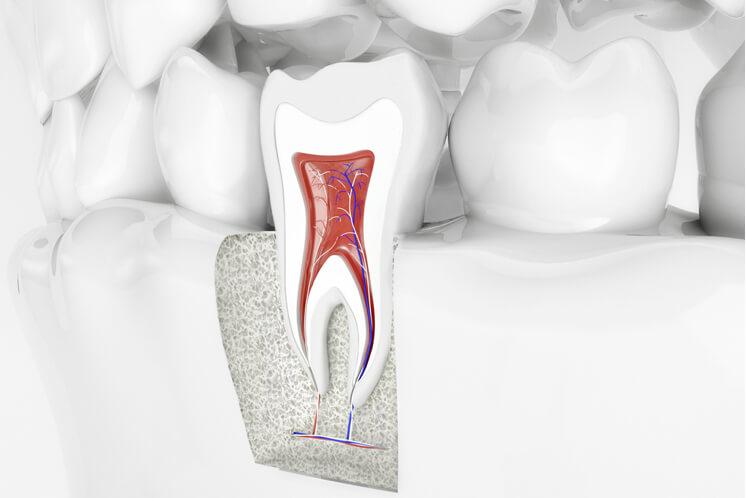nervios dentales